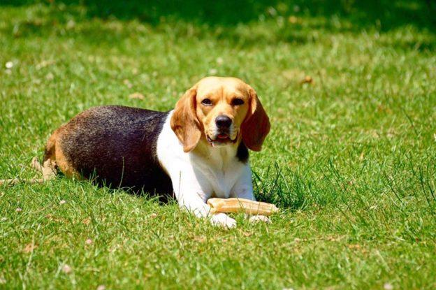 Uncategorized | Healthy Paws Animal Hospital